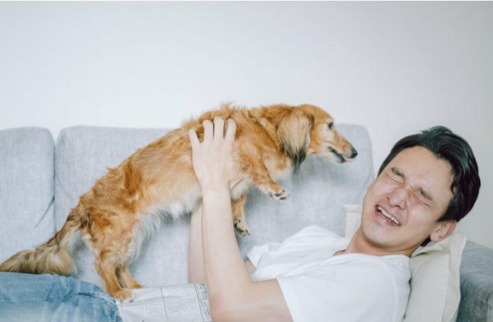 老犬が甘えるのはナゼ?理由とその行動・対処法について解説 ...