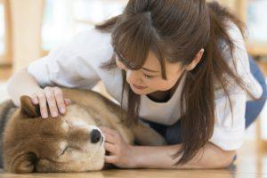 柴犬を撫でる女性