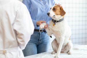動物病院と犬