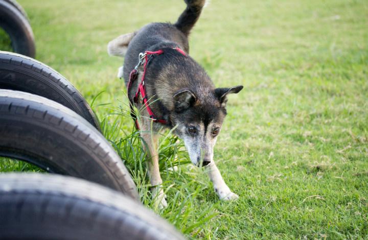 タイヤと犬