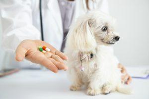 薬を嫌がってる犬