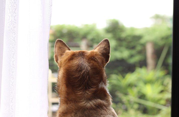 ない ペット 臭く 犬の便が臭い、糞臭を抑えるドッグフードの選び方  犬のQ&A集