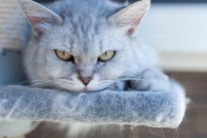老猫の免疫力をアップする