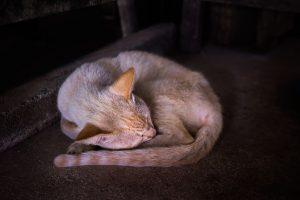 老猫が寝ない