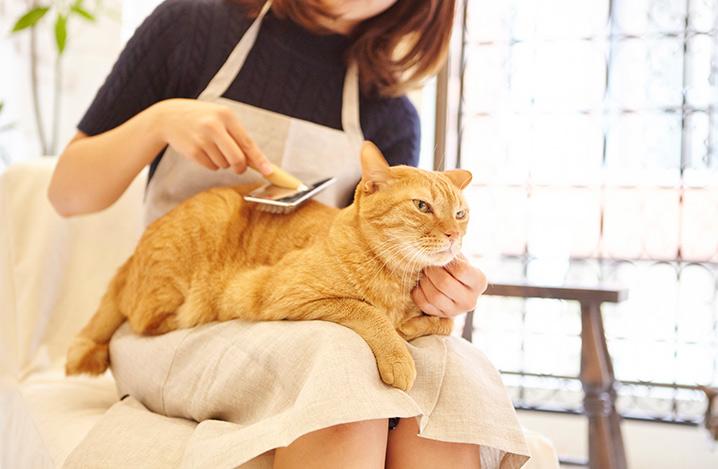 老猫のシャンプー方法