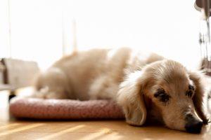 老犬の介護用品