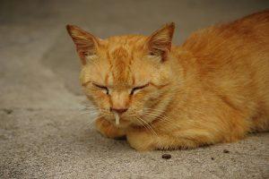 老猫の鼻水
