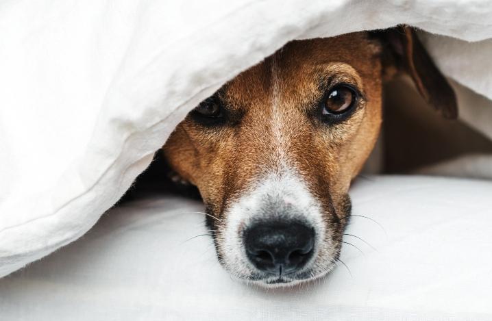 老犬の夜泣きを乗り切る