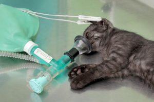 老猫 呼吸が早い